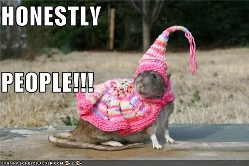 animals dressed up honestly I Can Has Cheezburger Knitted people rats rodents wtf