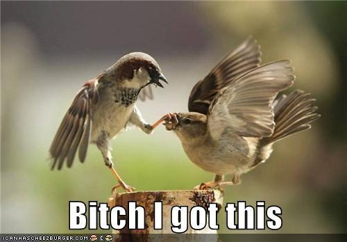 birds i got this shut up stop - 5238121472