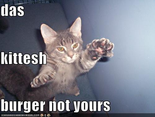Cheezburger Image 5239061760