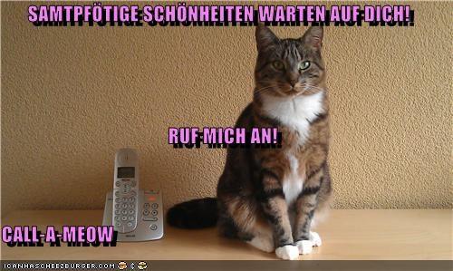Cheezburger Image 5239656192