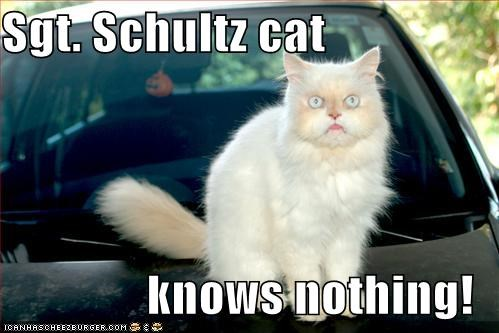 Sgt Schultz Cat Knows Nothing Cheezburger Funny Memes Funny