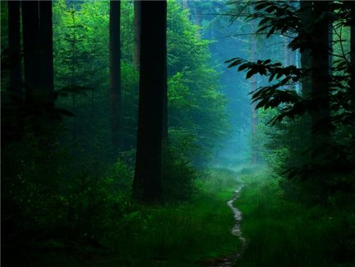 calm Forest getaways green mist path pathway trail trees unknown location - 5240066304