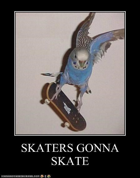 animals birds haters gonna hate I Can Has Cheezburger parakeets skateboarding skateboards - 5240494336