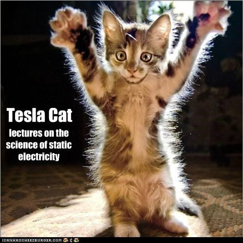 cat,I Can Has Cheezburger,kitten,Nikola Tesla,science,science rules,static electricity,tesla