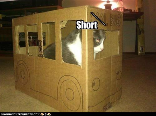 animals boxes buses cardboard box Cats dumb I Can Has Cheezburger short bus - 5240813312