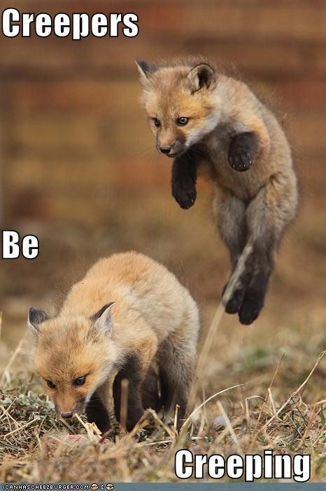 animals behind creepy foxes I Can Has Cheezburger jumping surprise - 5240823552
