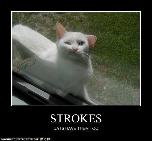 animals,Cats,I Can Has Cheezburger,strokemouth,strokes,windows