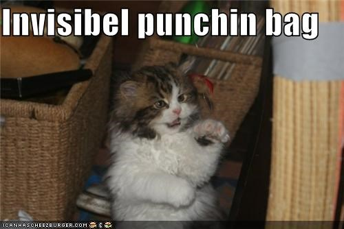 animals,boxing,Cats,I Can Has Cheezburger,invisible,punch,punching bag