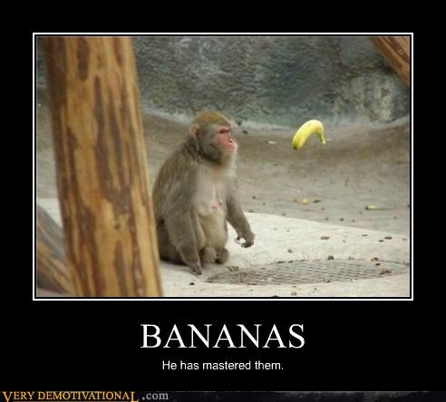 BANANAS He has mastered them.