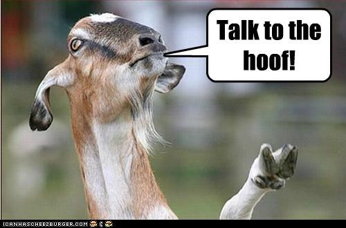 Talk to the hoof!