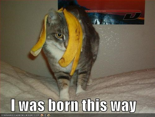 animals,banana peel,bananas,Cats,food,fruit,I Can Has Cheezburger