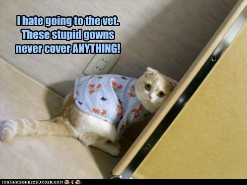 anything caption captioned cat cover do not want exposed going gown gowns hate never Sad stupid vet