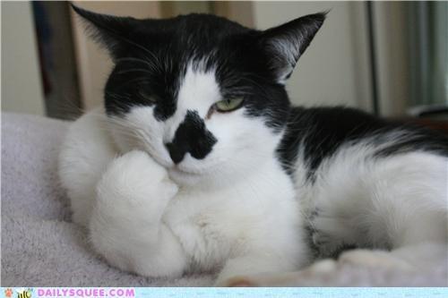 cat comparison Isaiah Mustafa meme Photo pose posing - 5242600192