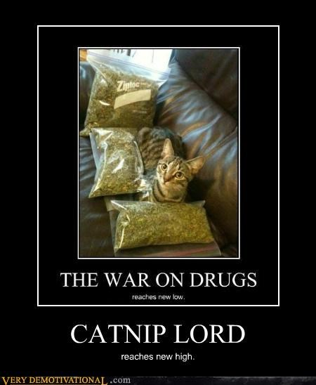 cat catnip drugs high hilarious - 5242729728