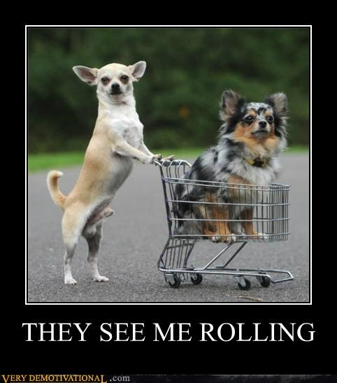 animals,dogs,hating,hilarious,rolling,shopping cart