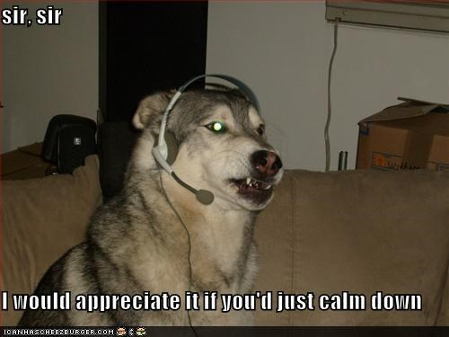 best of the week calm down Hall of Fame headphones help husky malamute phone sir stay calm tech support technology - 5243125504