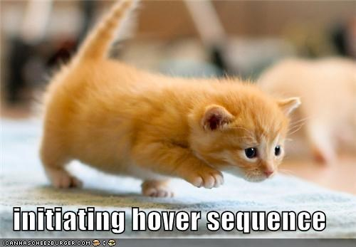 captioned cat hover HoverCat initiating kitten sequence stepping tabby - 5243170560