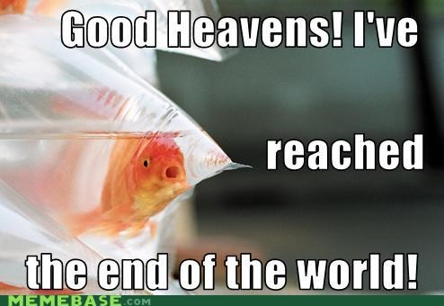 end of the world goldfish Memes memory what - 5243240960