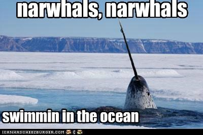 animals,awesome,narwhal,ocean,swimming