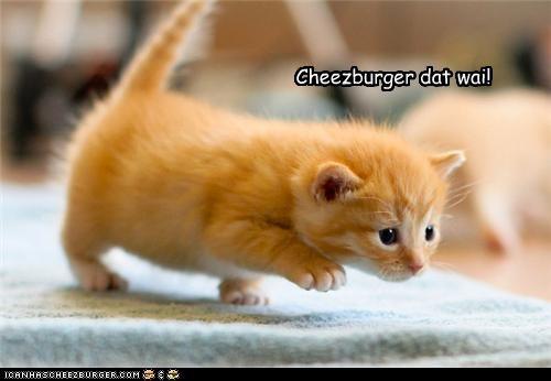 Cheezburger Image 5244022528
