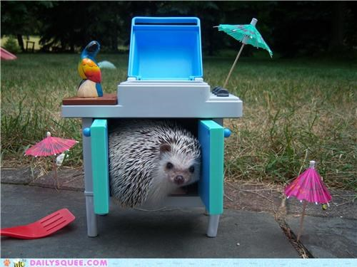 curled up hedgehog reader squees relaxing space - 5244375040