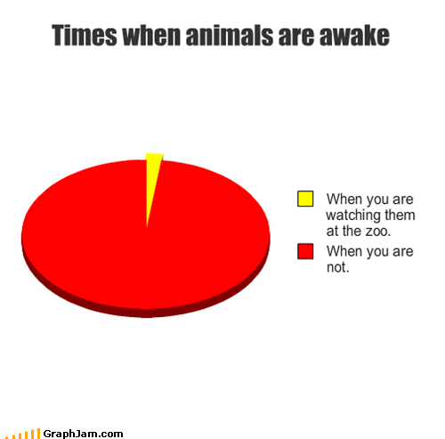 Times when animals are awake