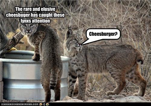 Cheezburger Image 5244699392