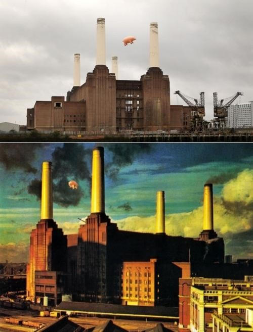 animals Marketing Campaign pink floyd - 5244799744