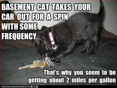 BASEMENT CAT TAKES YOUR CAR OUT FOR A SPIN WITH SOME FREQUENCY That's why you seem to be getting about 2 miles per gallon