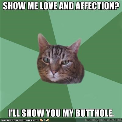 affection behavior butthole butts gross love mean memecats Memes - 5245130240