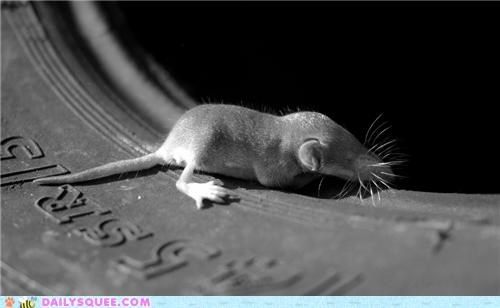 asleep baby homophone meanings multiple napping pun retired shrew sleeping squee spree tire tired tires