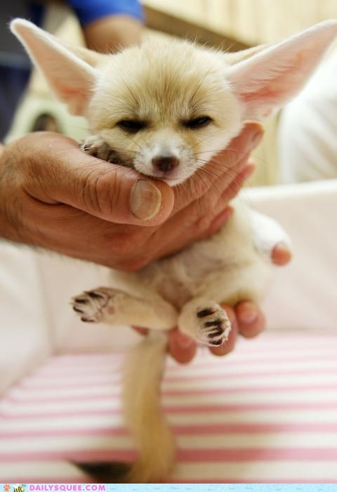 baby comparison fable fennec fennec fox fox grumpy Hall of Fame kit metaphor pun rumplestiltskin - 5245487360