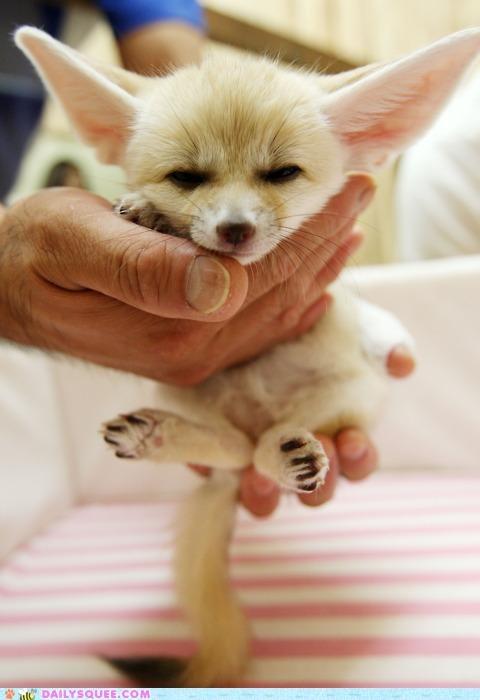 baby comparison fable fennec fennec fox fox grumpy Hall of Fame kit metaphor pun rumplestiltskin - 5245487360