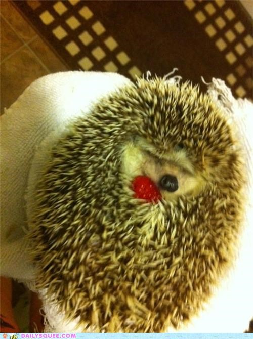 adorable baby berry connection cuddling endearing friends friendship Hall of Fame hedgehog noms pun raspberry touching unbearably cute