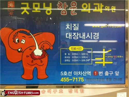 animal cleaning elephant map sign wait what - 5246102528