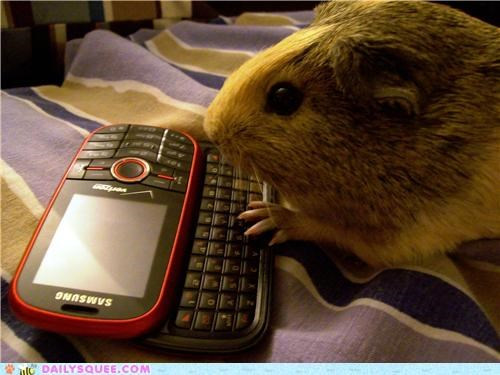 caught cell phone guinea pig phone reader squees texting - 5246360576