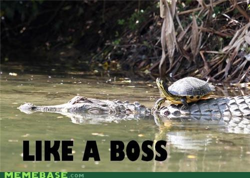 alligator animals animemes fishes Like a Boss turtle - 5246878464