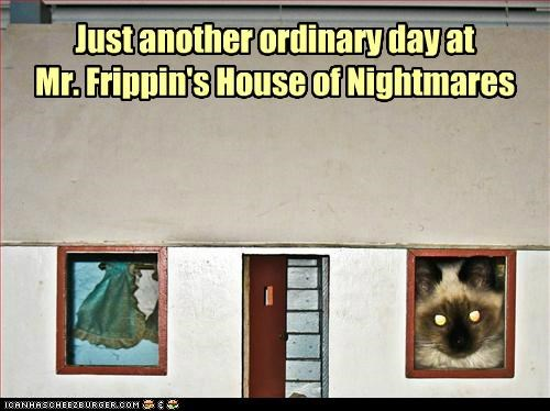 another caption captioned cat day himalayan house nightmares - 5246984704