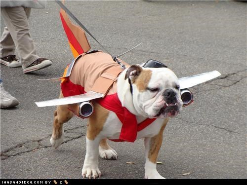 airplane bulldog bullgoggie airlines clothes costume dogtober dress up halloween halloween costume howl-o-ween october - 5247494656