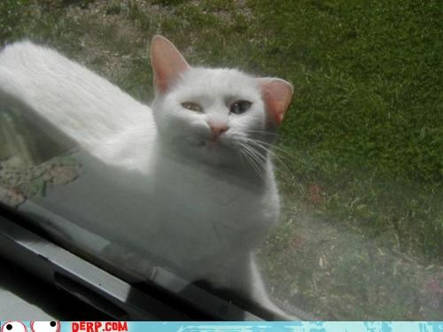 can-i-come-inside cat critters derp kitteh please stray - 5247499264
