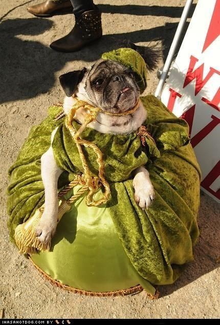 beautiful clothes corset costume dogtober dress dress up fancy gown halloween halloween costume howl-o-ween october pug regal royal royalty - 5247512320