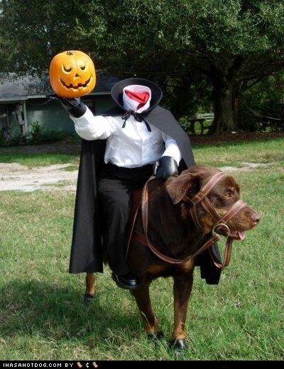 clothes costume dogtober dress up halloween halloween costume headless horseman headless houndman howl-o-ween mixed breed october rottweiler sleepy hollow the legend of sleepy hollow - 5247556096