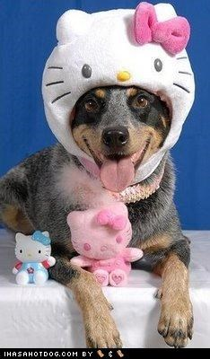 clothes costume dogtober dress up halloween halloween costume happy happy dog hello kitty hello there howl-o-ween mixed breed october silly dog whatbreed - 5247559168
