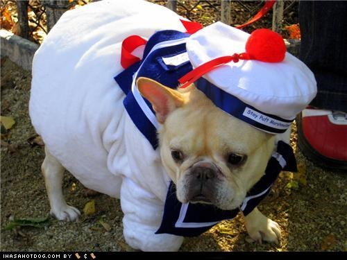 clothes,costume,dress up,french bulldogs,Ghostbusters,halloween,halloween costume,howl-o-ween,mr-stay-puft,stay puft,stay puft marshmallows