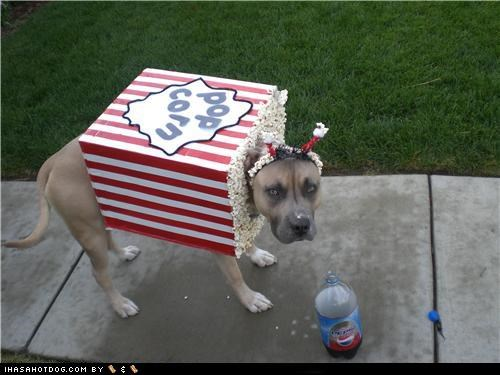 clothes costume dogtober dress up halloween halloween costume howl-o-ween october pit bull pitbull Popcorn snacks