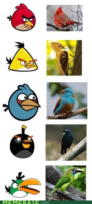 angry birds,graphs,IRL,Memes
