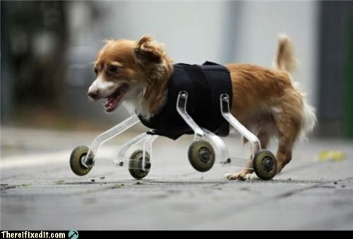 animals dogs poll prosthetics wheels