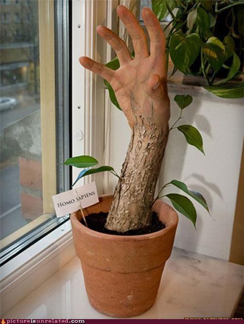 creepy grow hand wtf - 5248105472