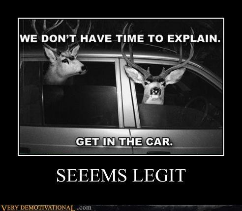 animals car deer Terrifying wtf - 5248178176