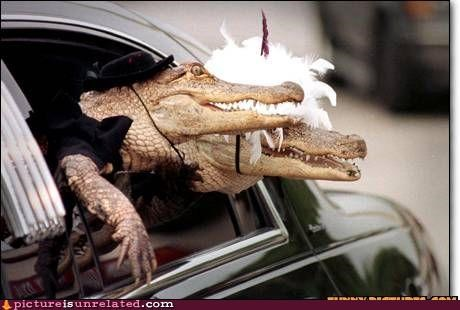 alligator costume wedding wtf - 5248200192